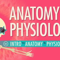 Anatomy/Physiology 1/2