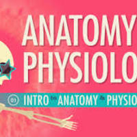 "Taylor, Steed ""Anatomy and Physiology Virtual Science Notebook"