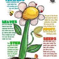 Plants - Kinder 2Q
