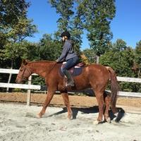 English Style Horseback Riding Mann