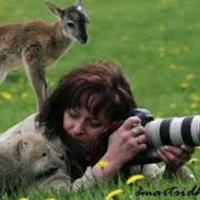 Stephens - Wildlife Careers