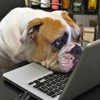 Bulldog Academy Orientation