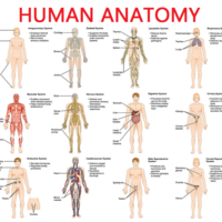 Sample Anatomy Student Binder