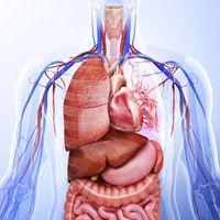 Unit 3-Human Organ Systems