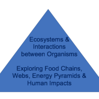 Ecosystems & Interactions between Organisms