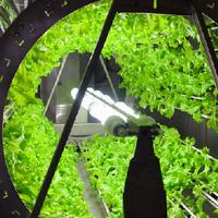 Herb Wheel STEM 2018