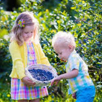 Blueberry Preschool