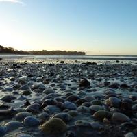 NZ Rocky Shore