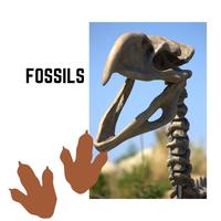 Fossils LiveBinder