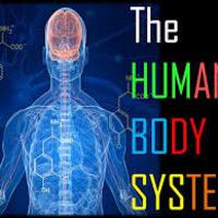 NC 5th Grade Body Systems Binder