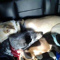 Our 3 Amigos