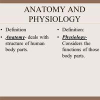Anatomy & Physiology Semester 1