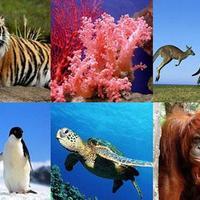 SAL1- Novice - Animales en peligro de extinci��n