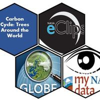 Just in Time Workshop: Carbon Cycles: Trees Around the World