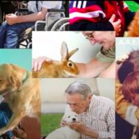 Animales que ayudan al ser humano - Grupo anaranjado