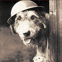 Animals and War Teachers resource