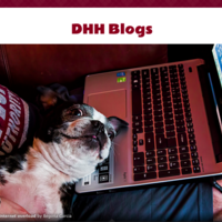 DHH Blogs
