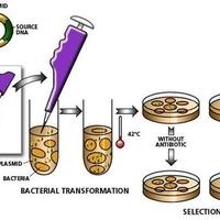 Genetic Engineering Unit Resources