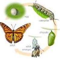 The Stages of a Butterflies Life Cycle