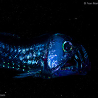 Y12 Biology - Life in the Deep Ocean