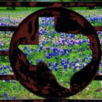 Texas Bluebonnet Books 2015-2016
