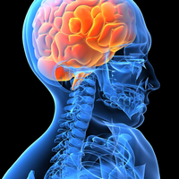 Traumatic Brain Injury and Executive Function
