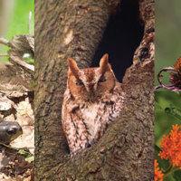 Plant & Wildlife Diseases