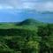 Rainforest:Jungle Life