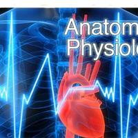 Kasey LamptonAnatomy and Physiology Virtual Science Notebook