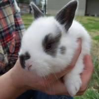 Senior Exit - Rabbitry