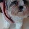 Dogs | Qenve | Cães | Pasa | Perros | Köpek -für die fremdsprachige Wohnbevölkerung der Schweiz