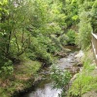Yr13 Biology Ecology of New Zealand Streams