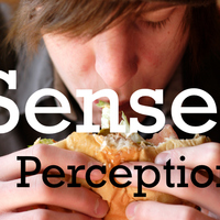 Psychology - Senses and Perception