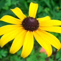 Black-Eyed Susan Picture Book Nominees 2015-16