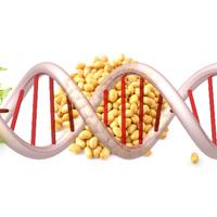 GMO KLO