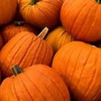 Roses pumpkin recipes
