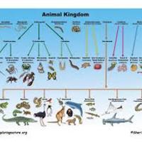 5th Grade Science- Animal Classification