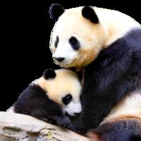 Giant Panda Resources