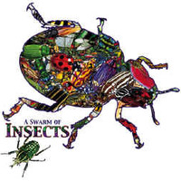 2nd - Insect Interactives