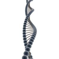 HS Biology-Molecular Genetics