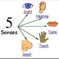 Unruh - Senses Test