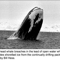 The Inupiaq and Their Whaling Tradition