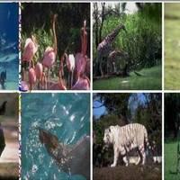 Zoo-to-Do