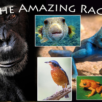 The Amazing Race Resources