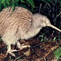 New Zealand Native Species