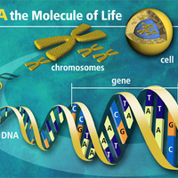 Unit 6: Molecular Genetics