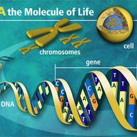 Unit 6: Molecular Genetics