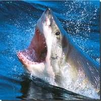 Marine Biology - Teacher Writing Prompts