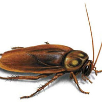 Contest - Man Dies After Eating Most Roaches