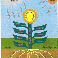 Multiple Intelligences Resources